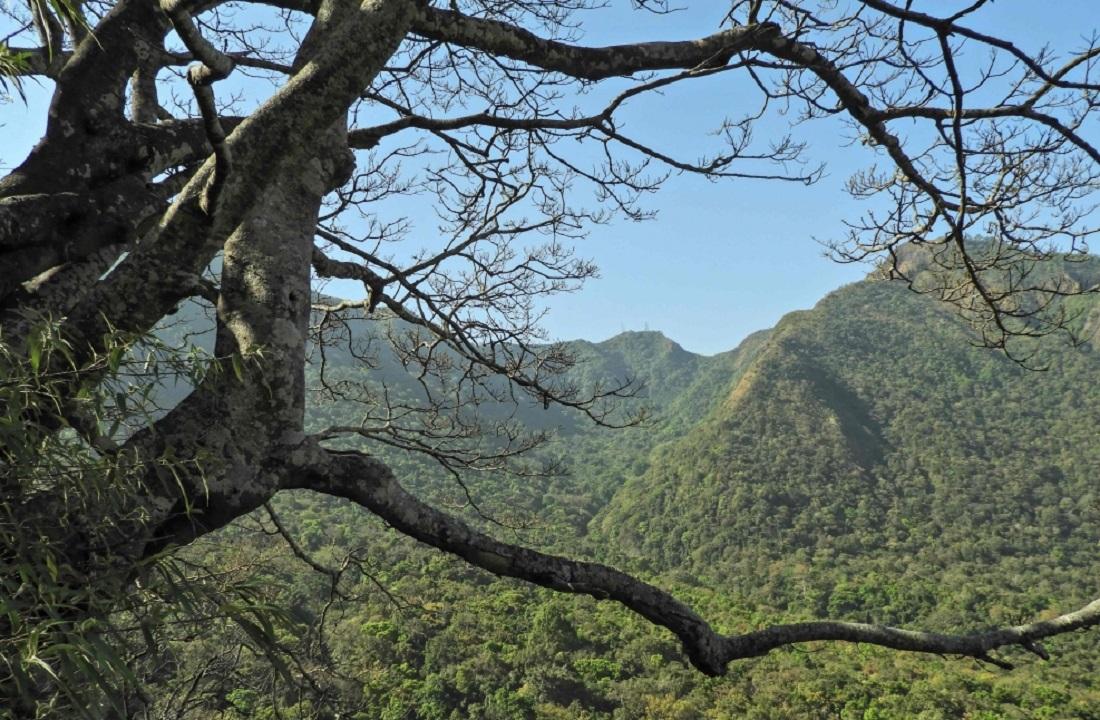 موطن القردة الجديدة المكتشفة في ميانمار. أ.ف.ب