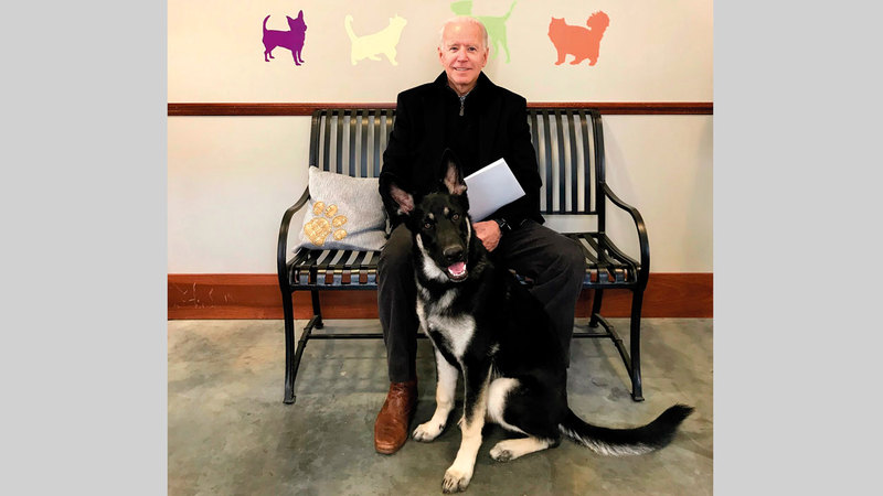 بايدن مع كلبه «ميجور».  من المصدر