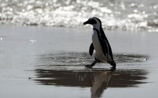 الصورة: بالصور.. الحياة البرية حول العالم
