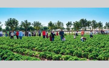 الصورة: يزن القضماني.. الزراعة العضوية شغف لا يخلو من التحديات