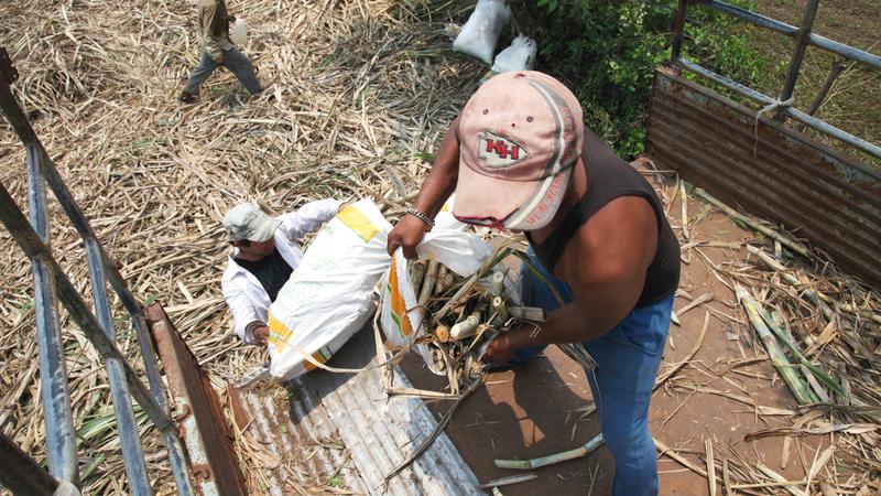 العمال يتكبدون مشقة كبيرة في عملهم.  غيتي