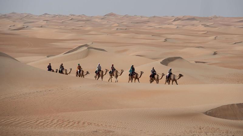 رحلة الهجن السابعة في طريق العودة إلى دبي. من المصدر