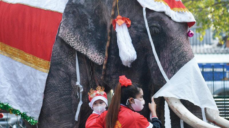 طالبان يقفان بجانب أحد الفيلة.   رويترز