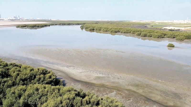 محمية الزوراء عبارة عن خور شبه استوائي يقع شمال عجمان.    أرشيفية