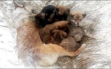 الصورة: نفقت متجمدة من البرد والجوع.. كلبة تضحي بحياتها لإنقاذ صغارها الـ 7