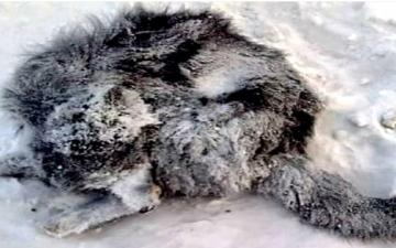 الصورة: بالفيديو.. الحيوانات تتجمد حتى الموت في شوارع أبرد مدينة في العالم