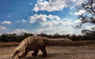 الصورة: بالصور.. أفضل اللقطات من الحياة البرية حول العالم في 2020