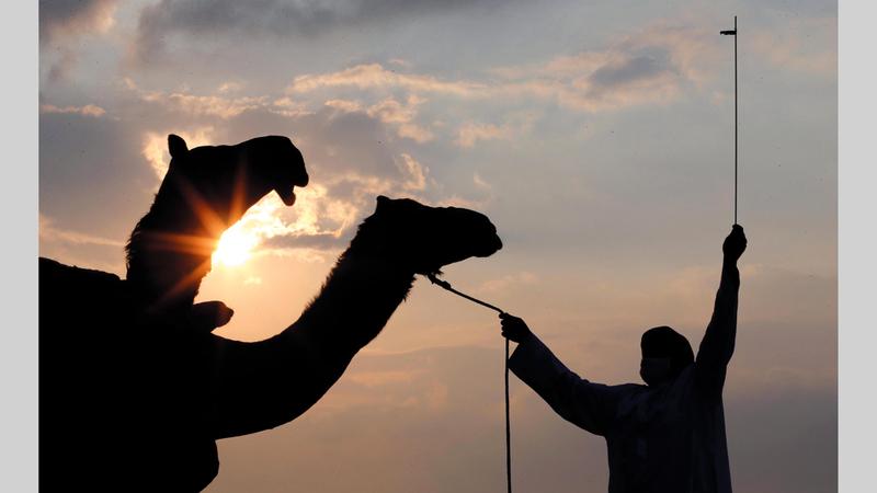 «المزاينة» تستكمل مسابقات الأسبوع العاشر من المهرجان.   من المصدر