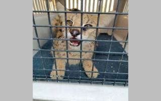 الصورة: مصادرة 105 حيوانات مفترسة في الشارقة خلال العام الماضي