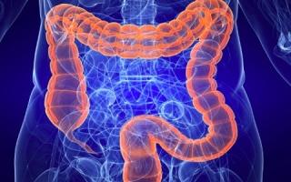 """الصورة: دراسة: بكتيريا الأمعاء تلعب دوراً في محاربة """"كورونا"""""""