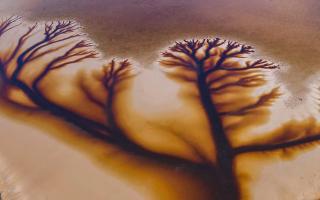 """الصورة: بالصور.. """"شجرة الحياة"""" في بحيرة كاكورا الأسترالية"""
