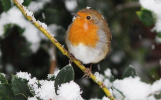 الصورة: بالصور.. الثلوج في المملكة المتحدة