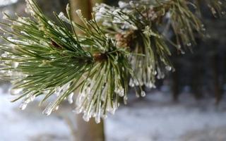 الصورة: بالصور.. لقطات للثلوج في اسكتلندا