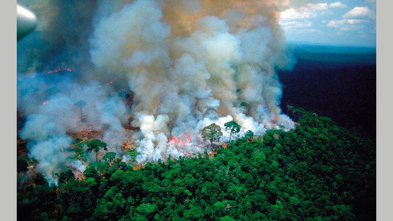 الحرائق أضرت الغابات بشكل بالغ.  أرشيفية