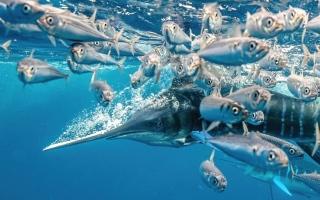 """الصورة: اللقطات المرشحة لمسابقة """"مصور تحت الماء"""" للعام 2021"""