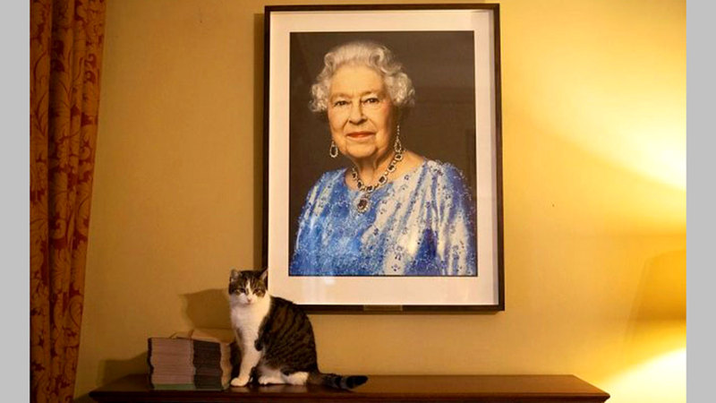 القط لاري وصورة الملكة إليزابيث.  من المصدر