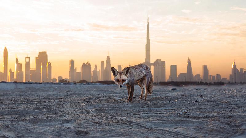 علي الفلاسي - الإمارات.