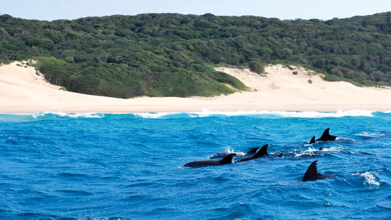 مياه بازاروتو تعد موطناً لعدد من الثدييات البحرية مثل: الدلافين والحيتان وأبقار البحر.   أرشيفية