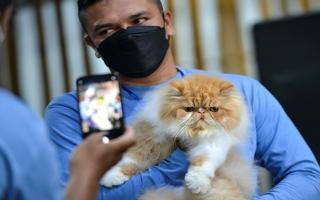 الصورة: بالصور: قطط تستعرض هواياتها في أندونيسيا