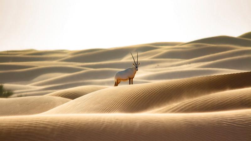 محمية دبي الصحراوية رائدة في مجال البحوث البيئية على مستوى المنطقة.  من المصدر
