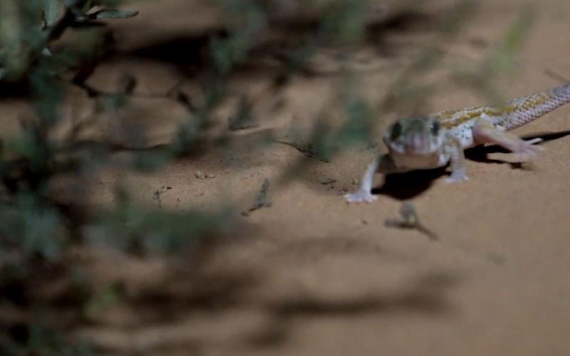 """الصورة: بالفيديو.. """"الاتحاد للقطارات"""" تعيد توطين 300 حيوان بري في الشارقة"""