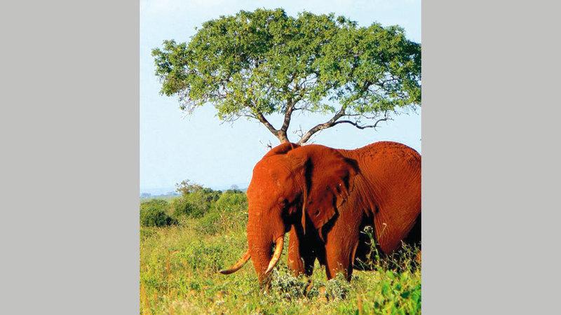 معظم السكان جعلوا من أراضيهم محميات خاصة مفتوحة يمكن للحيوانات البرية التنقل فيها بحرية.   أرشيفية