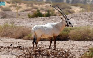 """الصورة: بالصور: محمية """"شرعان"""" بمحافظة العُلا في السعودية"""