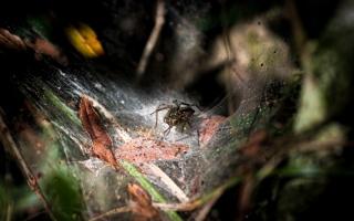 الصورة: صور من الطبيعة.. وادي لوناريجو في أوروغواي