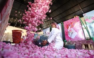 الصورة: مدينة الورود في السعودية تزهر في شهر رمضان