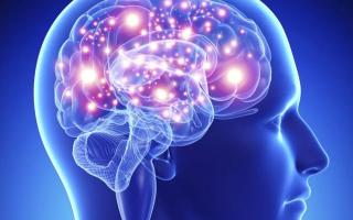 الصورة: دراسة تشير إلى العلاقة بين مستوى الذكاء ونشاط الدماغ