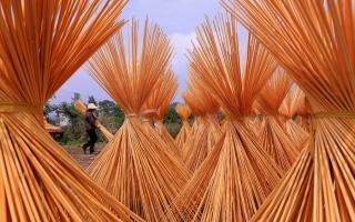 الصورة: بالصور.. تجفيف ألياف خيزران موسو بالهواء في الصين