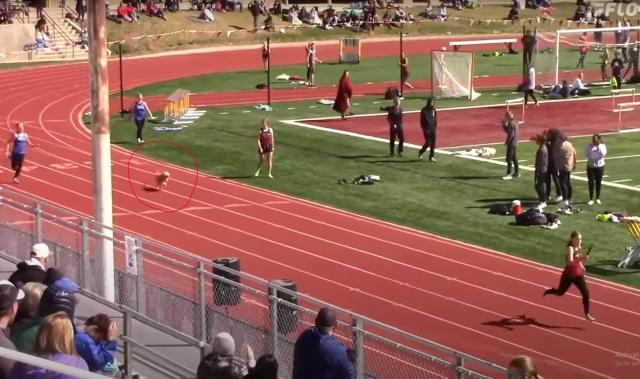 صورة بالفيديو: كلب يخترق سباق ألعاب القوى.. ويحرج بولت بزمن قياسي – رياضة – عربية ودولية