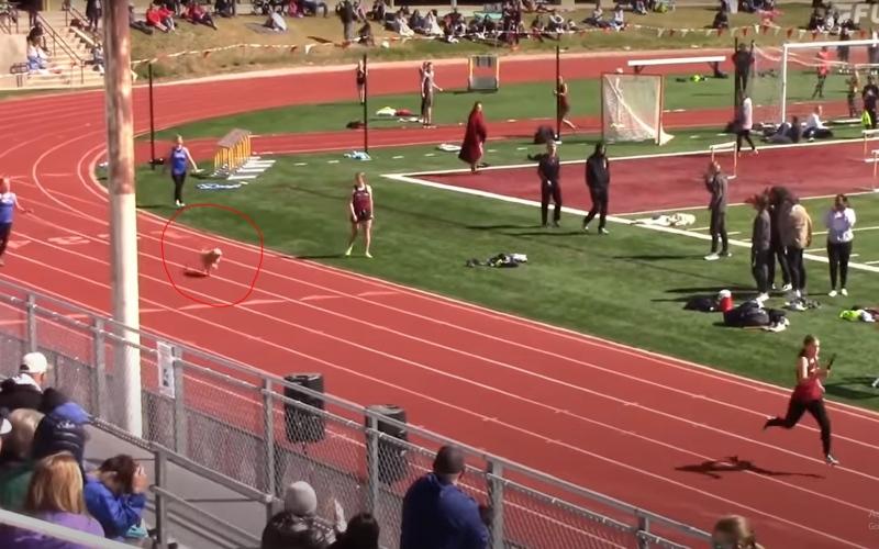الصورة: بالفيديو: كلب يخترق سباق ألعاب القوى.. ويحرج بولت بزمن قياسي
