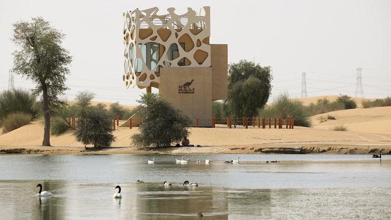 محمية المرموم تغطي 10% من مساحة دبي.   من المصدر