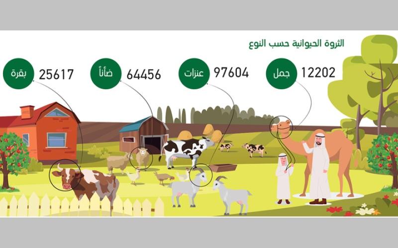 الصورة: غرافيك.. الإنتاج الزراعي في دبي ينمو 226% خلال 2019
