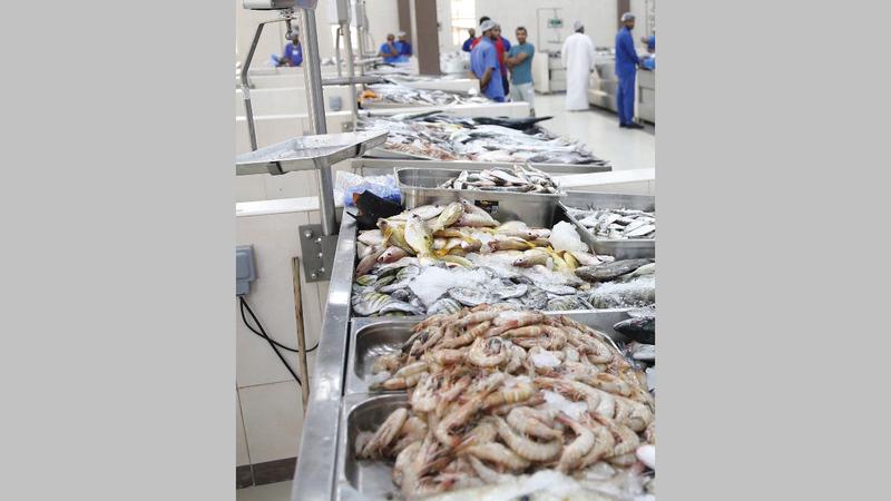 حصيلة بيع السمك لا تغطي مصروفات الصياد المواطن.   أرشيفية