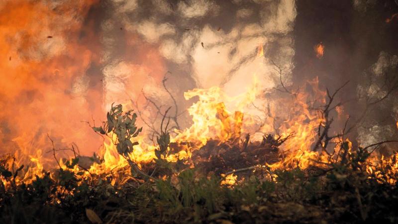 حرائق الغابات تزيد معاناة المكسيكيين.  أرشيفية
