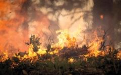 الصورة: تراجع مناسيب المياه في المكسيك مع اشتعال حرائق الغابات بسبب الجفاف