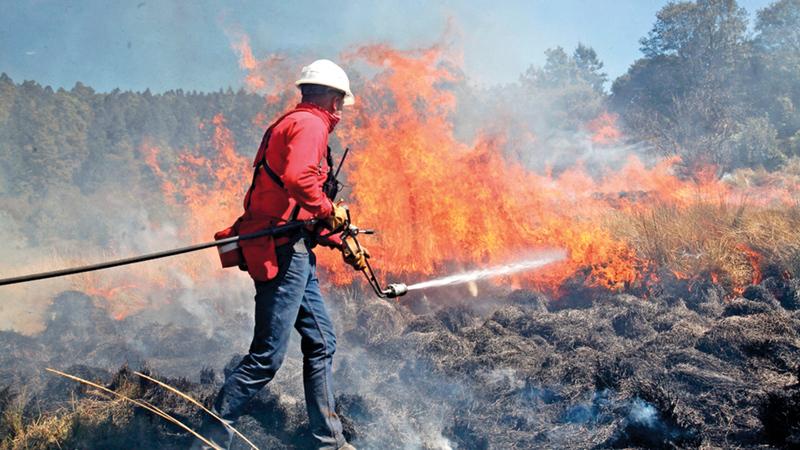 فرق مكافحة الحرائق لاتزال عاجزة عن إخماد ألسنة اللهب في الغابات.  أرشيفية