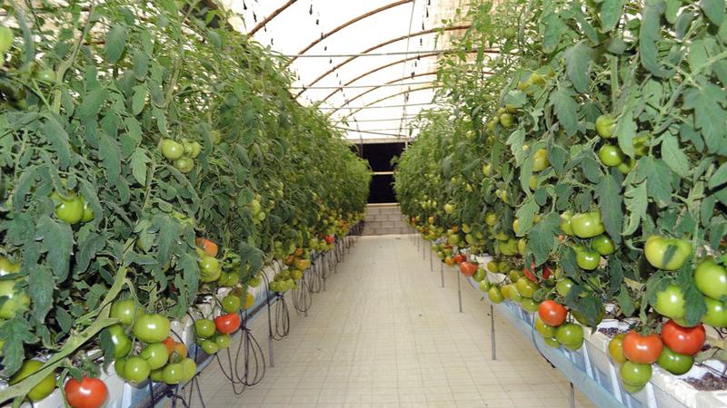 الوزارة ستعمل على تسويق المنتجات الغذائية المحلية عبر شراكات مع القطاع الخاص.  من المصدر