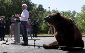 """الصورة: مرشح لمنصب حاكم كاليفورنيا يقوم بحملته مع """"دب"""""""