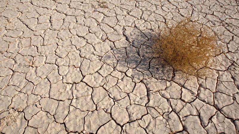 الجفاف ضرب الأراضي الزراعية بشكل كبير.  أرشيفية