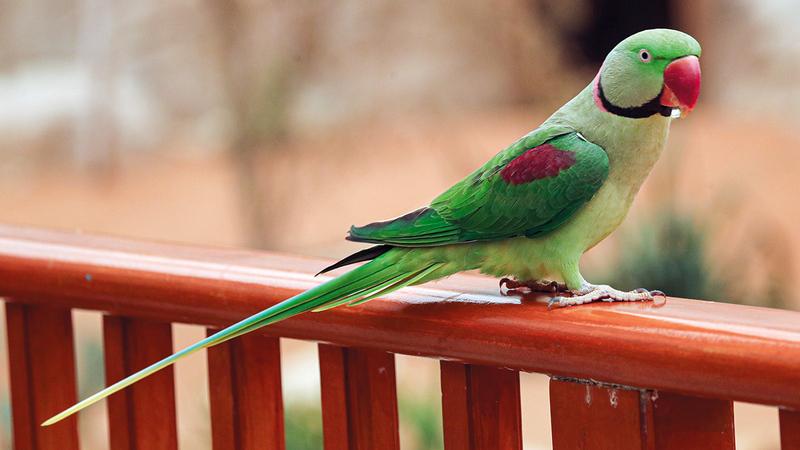 الحديقة راقبت الطيور باستخدام كاميرات ومناظير رصد.   من المصدر
