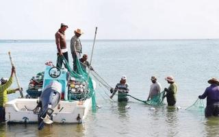 الصورة: «صيادي الفجيرة»: 50% انخفاضاً في أسعار الأسماك بعد عودة الصيادين