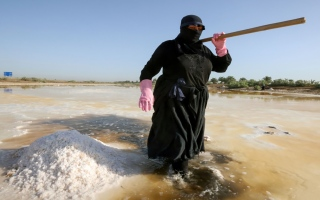الصورة: بالصور: جمع الملح من بركة في العراق