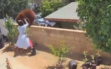 الصورة: بالفيديو.. فتاة تهاجم دباً مفترساً وتطرحه أرضاً