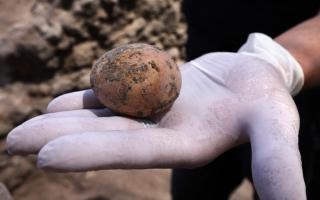 الصورة: بالصور.. بيضة دجاجة عمرها ألف عام