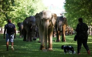 الصورة: بالصور: معرض لمنحوتات الفيلة