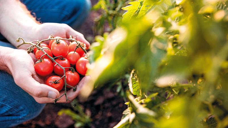 تشتهر دبي بالاهتمام بالأمن الغذائي الذي يعكس المنظومة البيئية المتنوّعة في الإمارة.   من المصدر