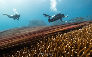 """الصورة: بالصور: تحت الماء في """"كوه سين"""" بتايلند"""